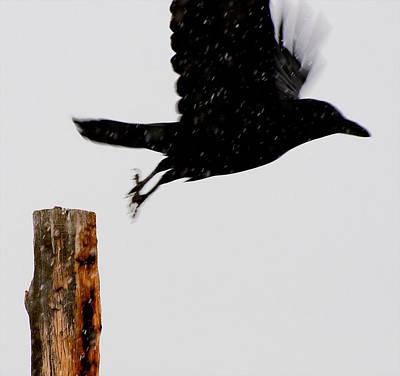 Print featuring the photograph Snow Raven Blurr by Britt Runyon