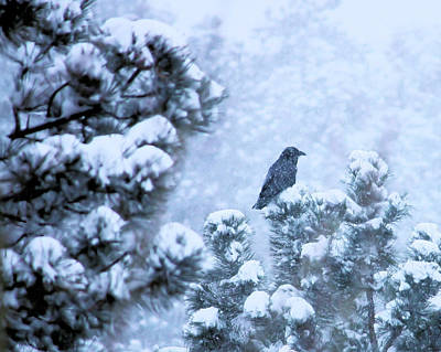 Photograph - Snow Raven by Wade Waldrup