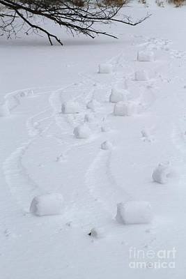 Snow Rollers Art Print