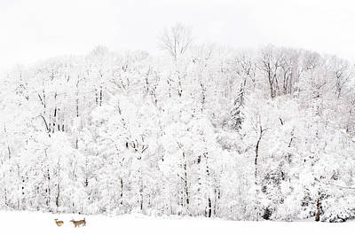 Photograph - Snow Romp by Emily Stauring