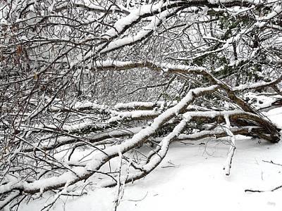 Realism Photograph - Snow Scene 2 by Patrick J Murphy