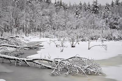 Photograph - Snow Scene 2 by Staci Bigelow
