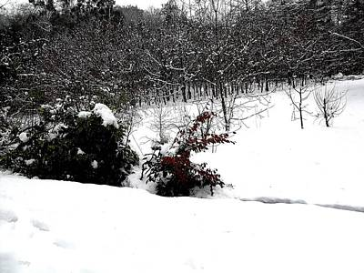 Realism Photograph - Snow Scene 6 by Patrick J Murphy