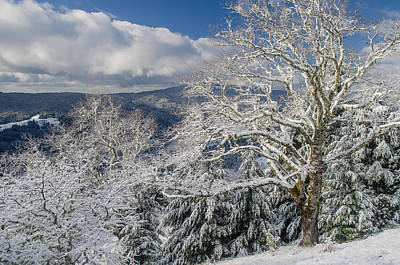 Photograph - Snow Scene At Berry Summit by Greg Nyquist