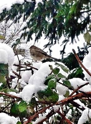 Photograph - Snow Scene Of Little Bird Perched by Susan Garren