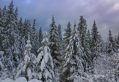 Photograph - Snow Sentinels by Idaho Scenic Images Linda Lantzy