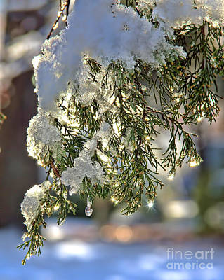 Photograph - Snow Sparkle by Betsy Foster Breen