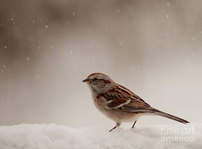 Winter Scene. Winter Landscape. Snow Landscape. Black And White. Birds Photograph - Snow Sparrow by Cheryl Baxter