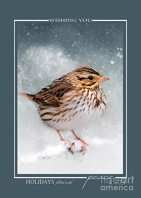 Photograph - Snow Sparrow Song Bird Christmas Cards by Jai Johnson