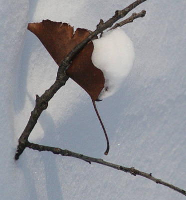 Photograph - Snow Still Life by Peg Toliver