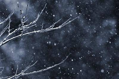 Photograph - Snow Storm In The Forest by Dan Sproul