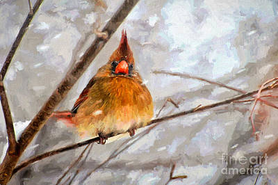 Cardinal Digital Art - Snow Surprise - Painterly by Lois Bryan