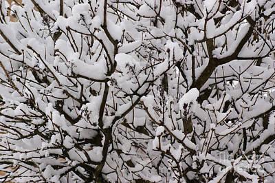 Snow Tree Art Print by Carol Lynch