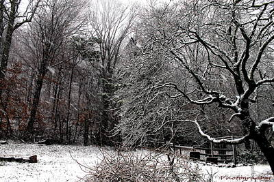Photograph - Snow Tree by Lawrence Scott