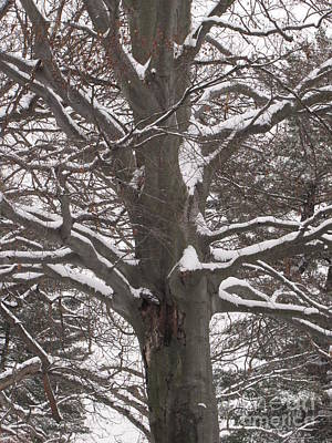 Art Print featuring the photograph Snow Tree by Melissa Stoudt
