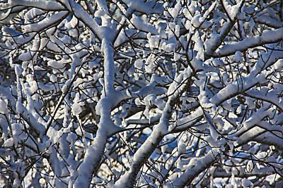 Photograph - Snow Tree by Tom Culver