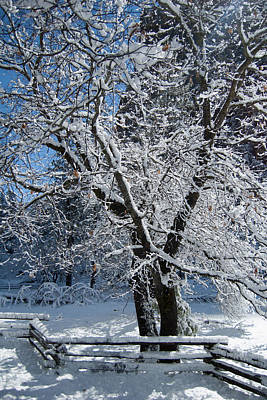 Digital Art - Snow Tree - Yosemite National Park by Jim Pavelle