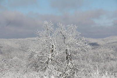 Photograph - Snow Trees by Carolyn Postelwait