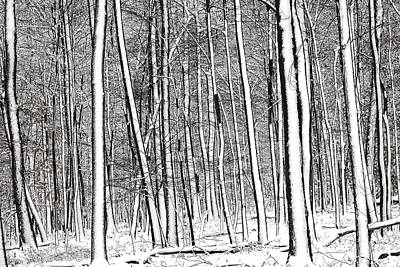 Photograph - Snow Trees by Dawn J Benko
