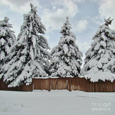 Antlers - Snow Trees by Southwindow Eugenia Rey-Guerra