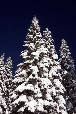 Photograph - Snow Trees by Michael Courtney