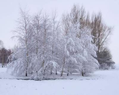 Art Print featuring the photograph Snow Trees by Paul Gulliver