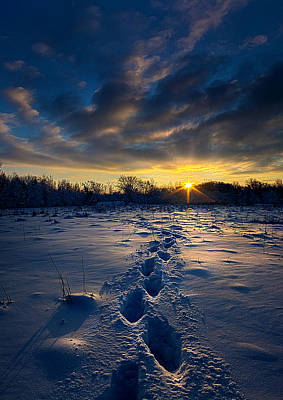Fall Leaves Photograph - Snow Trek by Phil Koch