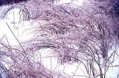 Snow Weeds 31 Art Print by Stephen Parker