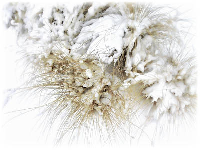 Winter Scenes Photograph - Snow Whiskers by Julie Palencia