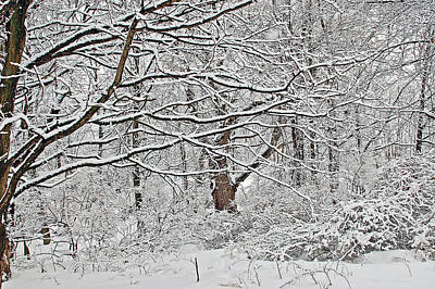 Winter Tree Photograph - Snow White Forest by Aimee L Maher Photography and Art Visit ALMGallerydotcom