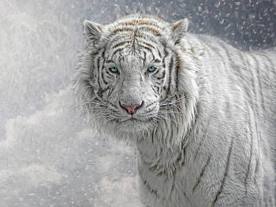 Panthera Photograph - Snow White by Joachim G Pinkawa