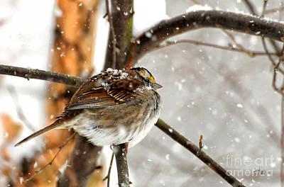 Photograph - Snowball by Lois Bryan
