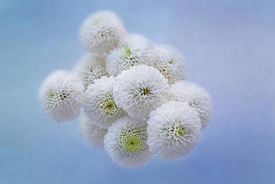 Snowballs-pom Mum Art Print by Kim Hojnacki