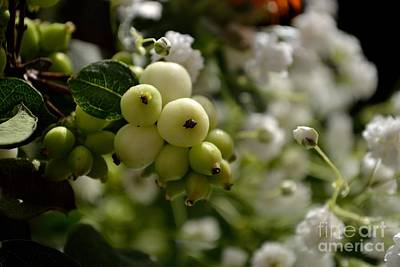 Photograph - Snowberries by Scott Lyons