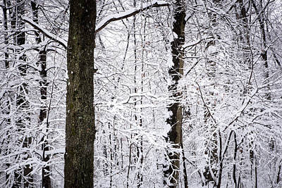 Noreaster Photograph - Snowbound by Erin Cadigan