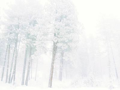 Winter Storm Photograph - Snowed In by Tara Turner