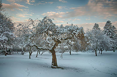 Photograph - Snowfall Ends At Twilight by Gary Slawsky