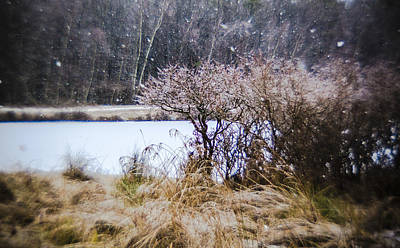 Photograph - Snowfall In The Magic Forest by Alex Potemkin