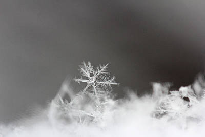 Beckylodes Photograph - Snowflake 1 by Becky Lodes