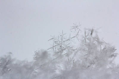 Becky Photograph - Snowflake 4 by Becky Lodes