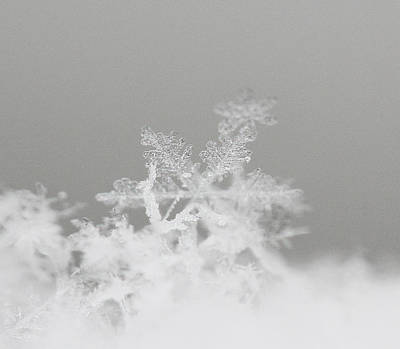 Beckylodes Photograph - Snowflake 8 by Becky Lodes
