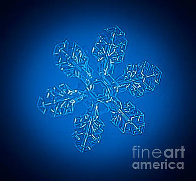 Photograph - Snowflake by Bianca Nadeau