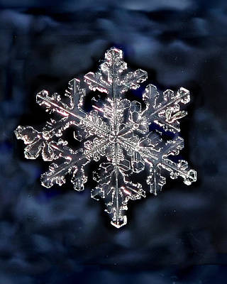 Photograph - Snowflake Blue by Lorella  Schoales