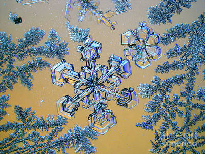 Photograph - Snowflake by Eye of Science