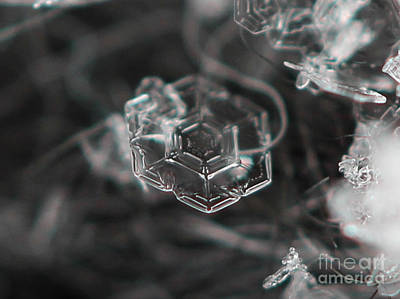 Photograph - Snowflake Geometry  by Stacey Zimmerman