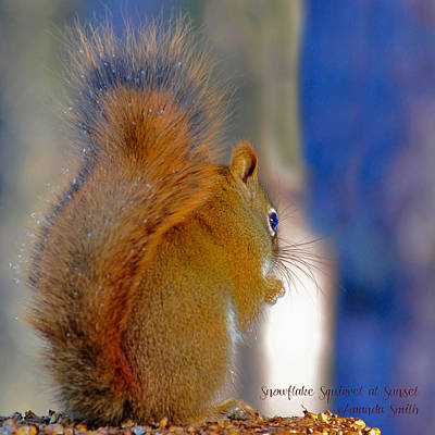 Photograph - Snowflake Squirrel At Sunset by Amanda Smith