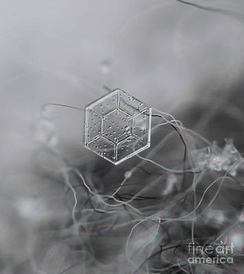 Photograph - Snowflake Symmetry by Stacey Zimmerman