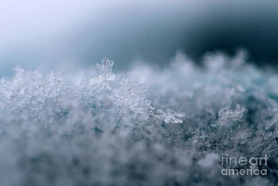 Photograph - Snowflake Symphony by Stacey Zimmerman
