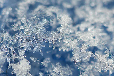 Photograph - Snowflakes Blue Two by Jennie Marie Schell
