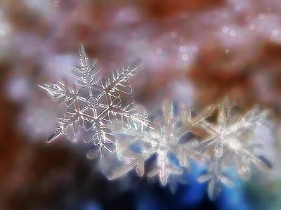 Art Print featuring the photograph Snowflakes by Lorella  Schoales